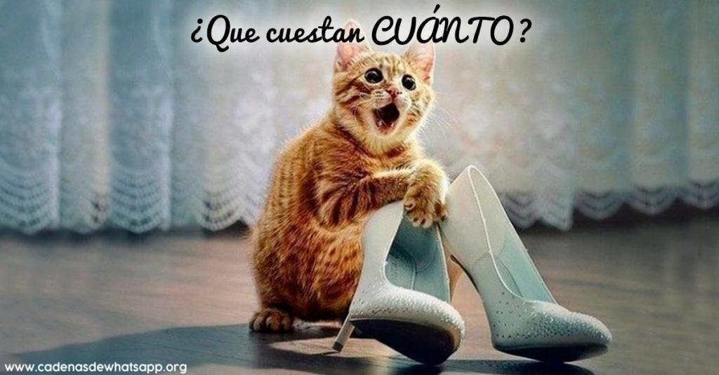 imagenes de gatos chistosas